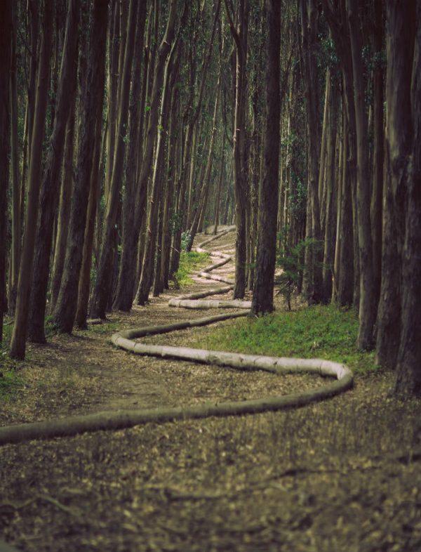 Winding bend in wood